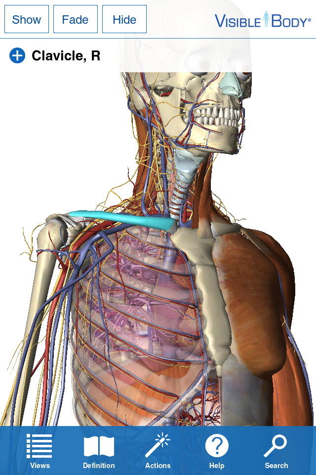 Visible Body For Iphone 44s 3d Human Anatomy Atlas By Argosy Publishing